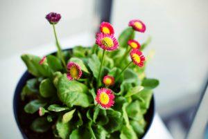 Inox korita za rože še popestrijo izgled cvetja