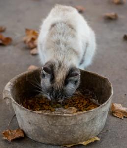 Kakovostna mačja hrana po ugodni ceni